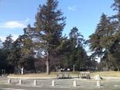 多磨霊園2-170x127